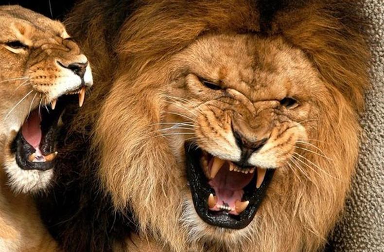 Каких женщин предпочитают Мужчины-Львы1